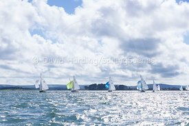 XOD fleet, Zhik Poole Week 2015, 20150823529