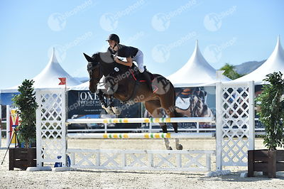 Oliva, Spain - 2018 October 2: 5 years old 1m15 during CSI Mediterranean Equestrian Autumn Tour I.(photo: 1clicphoto.com)