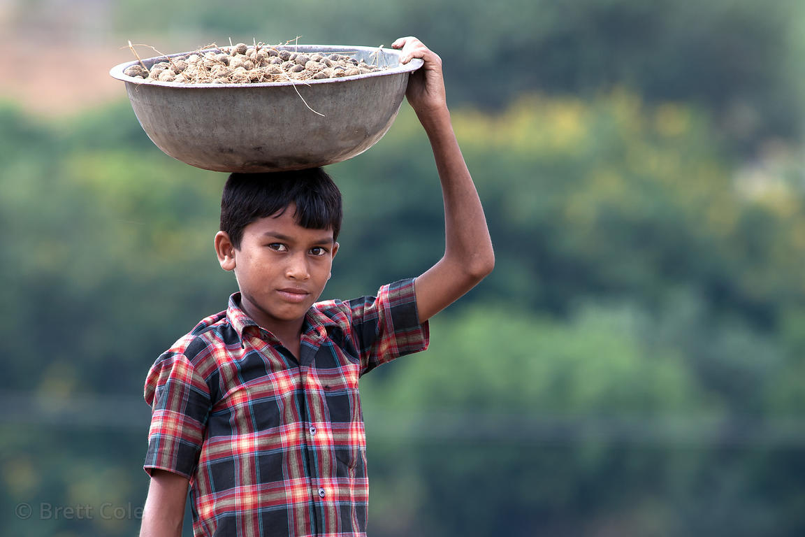 A boy collects camel dung for fire fuel, Pushkar, Rajasthan, India