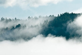 Rising Fog over Hood Canal and the Kitsap Peninsula