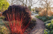 Path through the Winter Garden framed by cornus stems, hellebores and Carex morrowii 'Fisher's Form'. Sir Harold Hillier Gard...