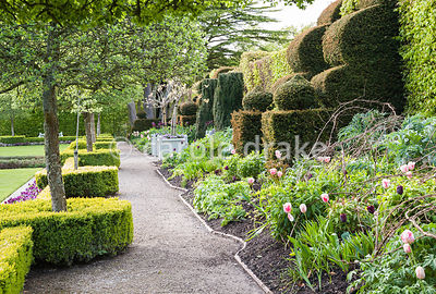 Border in the Summer Garden with hazel plant supports ready for perennials, backed by hornbeam and yew hedging. Holker Hall, ...
