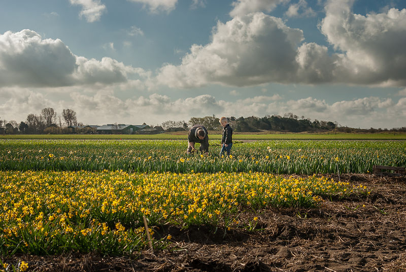 Father and son at work on the flower fields series 2of7