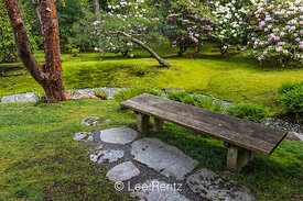 Bench and Moss in Seattle's Japanese Garden