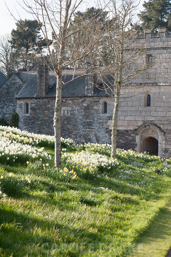 Cotehele, St Dominick, Cornwall photographs