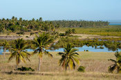 Mangroves and palm trees, Tofo, Mozambique