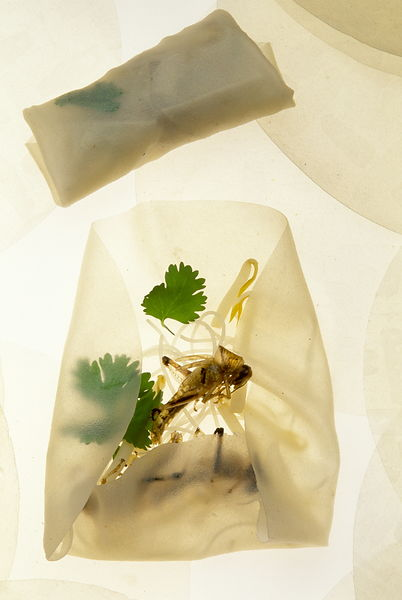 Grasshopper spring roll..Folded into a packet made from a thin rice sheet, fried grasshopper is combined with rice vernicelli...