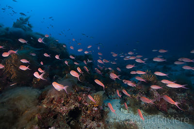 BANC_D'ANTHIAS_RSM_GR_IMG_9467