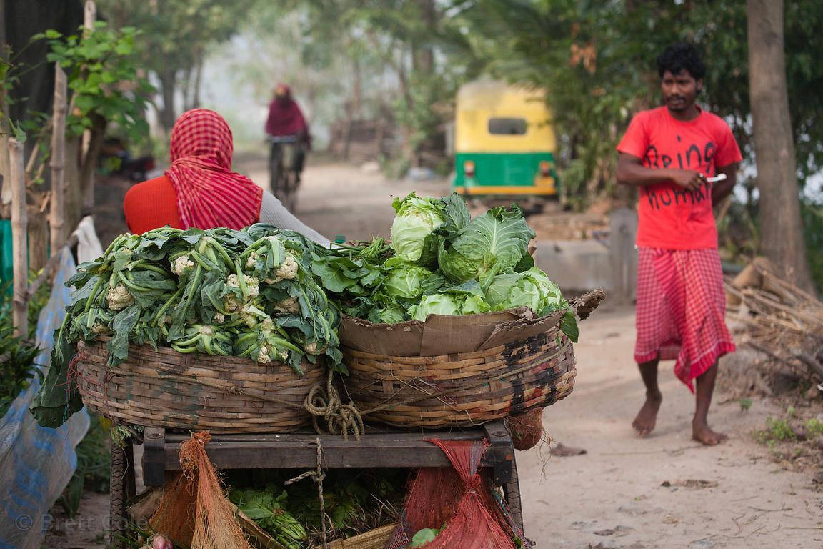 A rustic motorcycle cart carries vegetables for sale to small villages throughout the East Kolkata Wetlands, Kolkata, India.