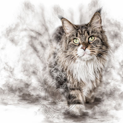 Art-Digital-Alain-Thimmesch-Chat-38