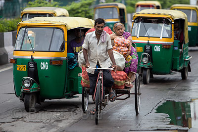 A woman transports tomatoes on a cycle rickshaw - surrounded by auto rickshaws, near the Delhi Railway Station, Delhi, India