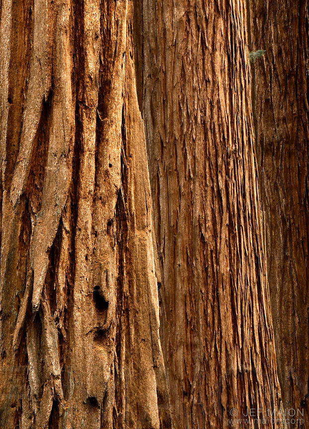 Tree trunks and bark pattern