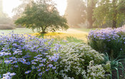 A collection of asters on the Mount illuminated by early sun. Forde Abbey, nr Chard, Dorset, UK