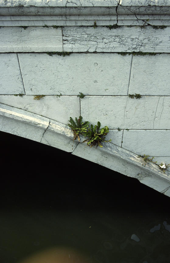 Italy - Venice - Detail of a bridge with a weed gowing from it