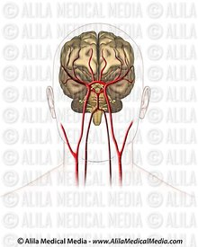 Neurology Images & Videos