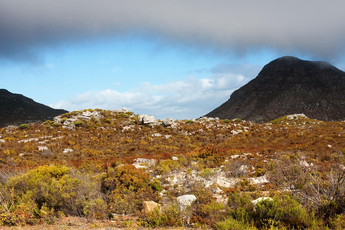 Fynbos vegetation in Patry's Valley, Cape Peninsula, South Africa
