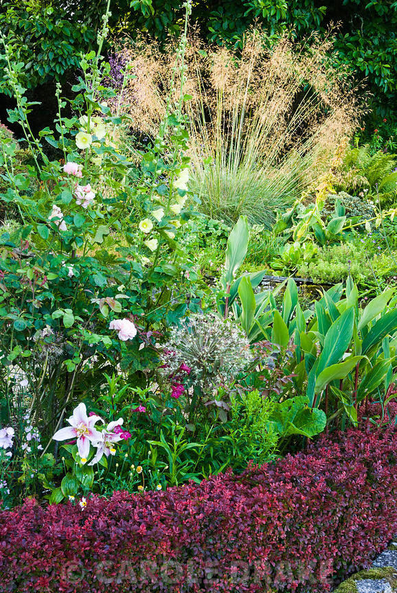 Beds containing a mix of herbaceous perennials, shrubs and bulbs near the house are edged with low hedges of Berberis thunber...
