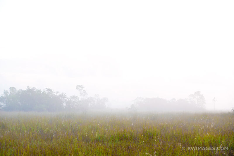 FOGGY MORNING SAWGRASS PRAIRIE EVERGLADES NATIONAL PARK FLORIDA