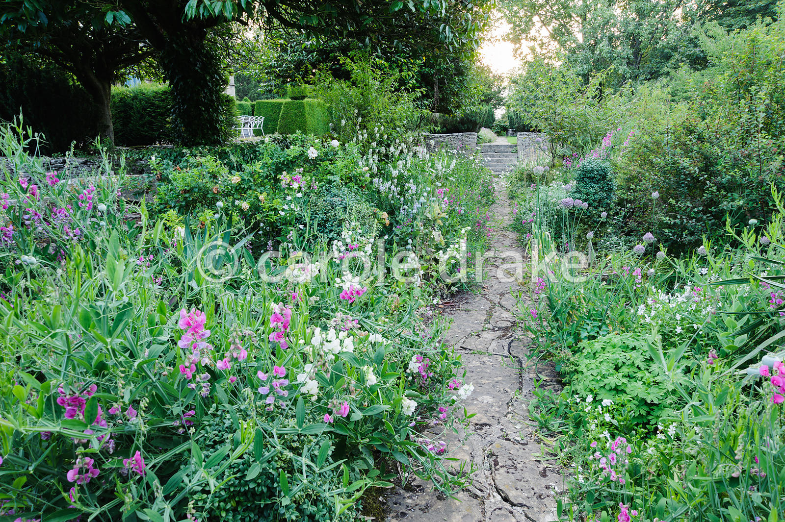 The White Borders on the southern edge of the garden full of hebes, alliums, perennial peas and agaves. Rodmarton Manor, Rodm...