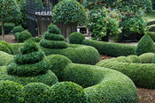 Clipped box and yew in the Parterre Garden with standard laurels and gazebo by Richard Overs. Bourton House, Bourton-on-the-H...