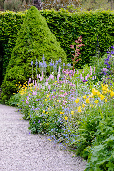 Double herbaceous borders planted with simple blocks of pale pink Persicaria bistorta 'Superba', yellow Welsh poppies, Mecono...