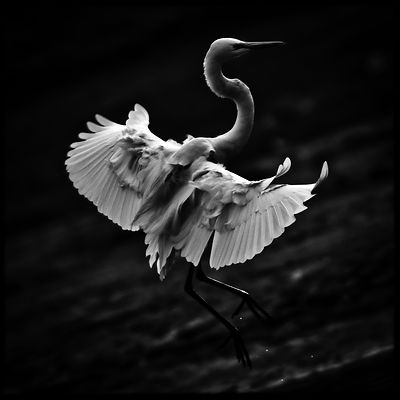 8154-Bird_Laurent_Baheux