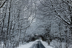 Road through snowy forest in Denmark