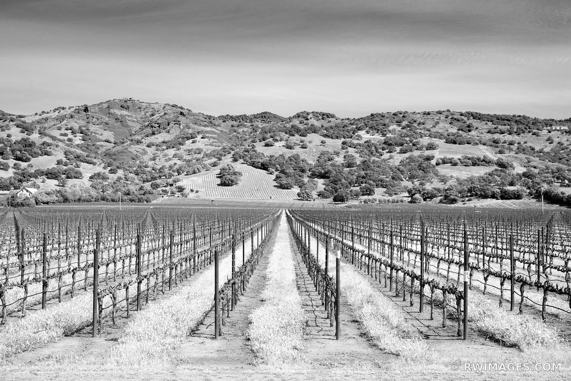 Vineyard napa valley black and white