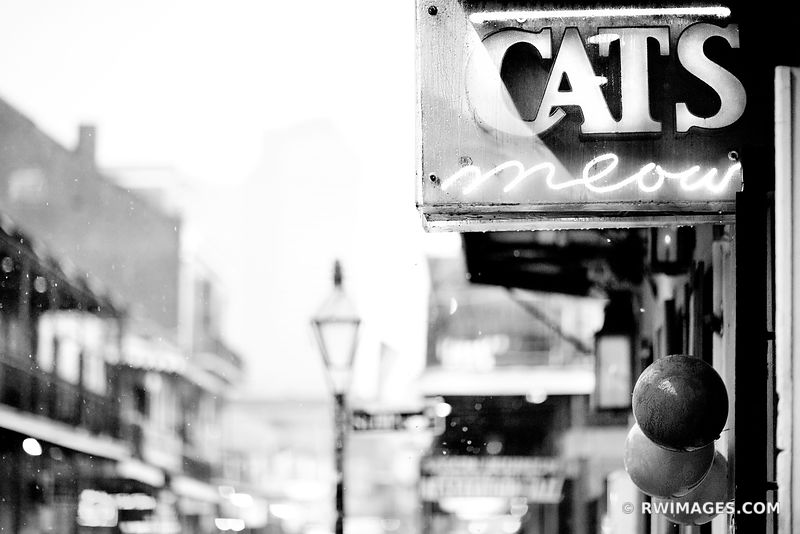 CATS MEAOW RAINY DAY FRENCH QUARTER NEW ORLEANS BLACK AND WHITE