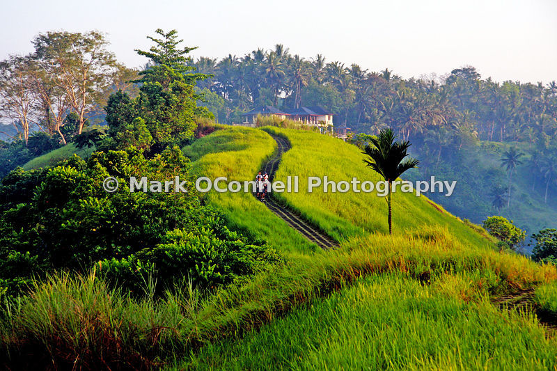 Hill top rice field