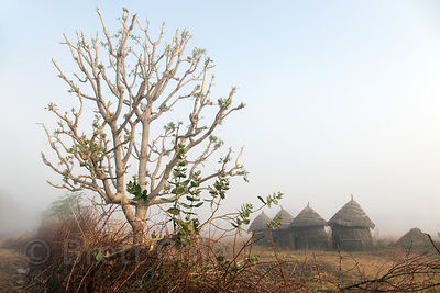 Misty desert morning on a farm with thatched huts, Nagaur village Rajasthan, India