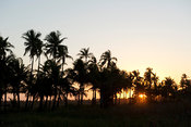 Palm trees at sunset, Tofo, Mozambique