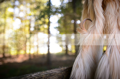 closeup of longhaired dog curled tail from behind in sparkly forest