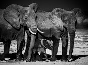 0978-Elephant-Family_Trust_Kenya_2015_Laurent_Baheux