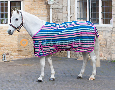 Grey pony wearing a brightly coloured rug - royalty free image