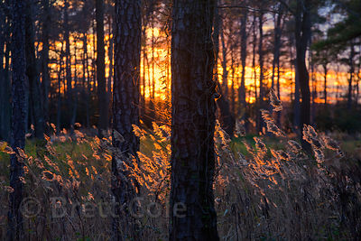 Last rays of sun on flowering grasses in a grassland, St. Michaels, Maryland, on the Eastern Shore of the Chesapeake Bay