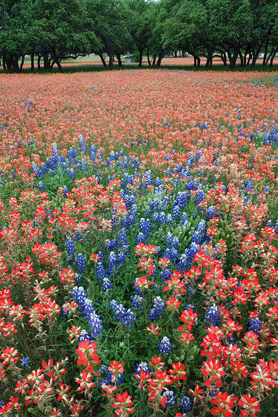 Colorful Field of Flowers