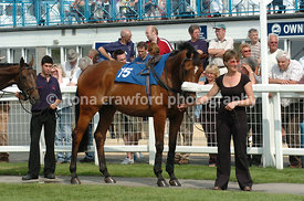 Horse standing in parade ring