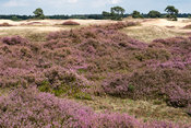 National Park 'Hoge Veluwe'