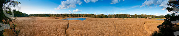 Espoo_Birdtower_Reed_Panorama_2_edit_flatten