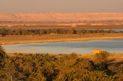 palm trees at lake Siwa, the Great Sand Sea, Western desert, near Siwa oasis, Egypt