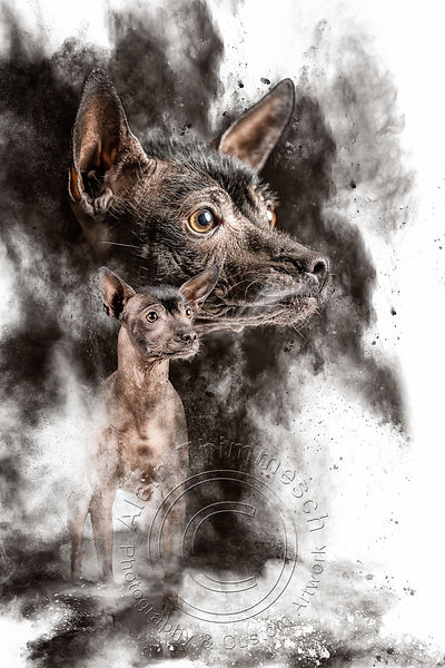 Art-Digital-Alain-Thimmesch-Chien-93