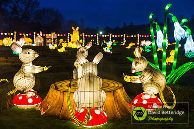 Longleat_Festival_of_Light-59