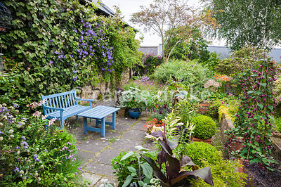 Blue painted seat on one side of the house is framed by climbers including Clematis 'Perle d'Azur' and Vitis vinifera 'Purpur...