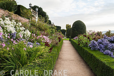 Borders on the Orangery Terrace at Powis Castle full of asters, Leucanthemella serotina, cosmos and Dahlia 'Admiral Rawlings'