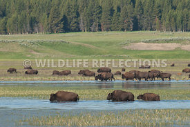 bison_creek_crossing