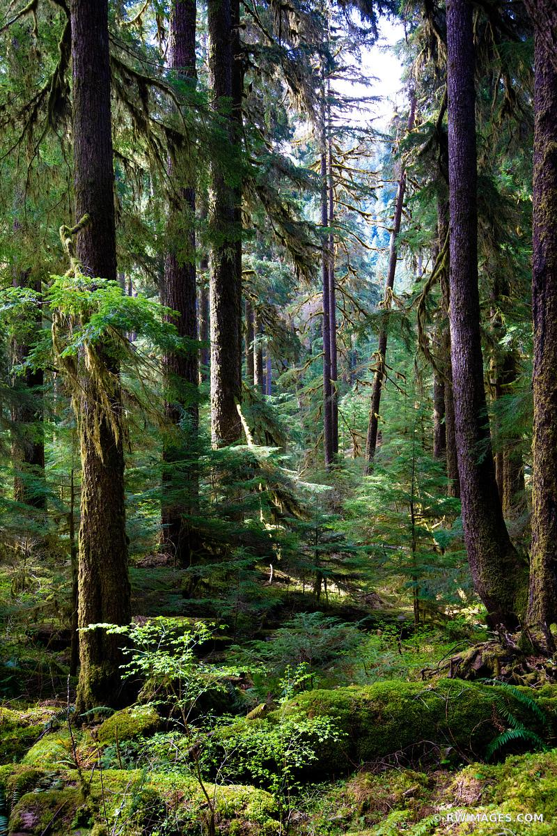 SOL DUC FALLS TRAIL OLYMPIC NATIONAL PARK WASHINGTON PACIFIC NORTHWEST FOREST