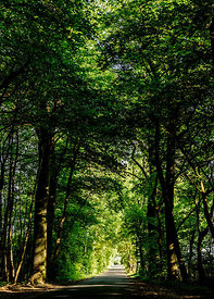 Road in the forest on South Funen