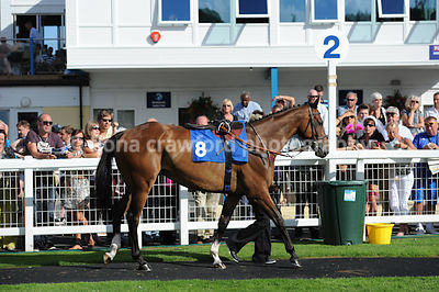3rd Aug 2013 Handicap Steeple Chase with winner Henry San
