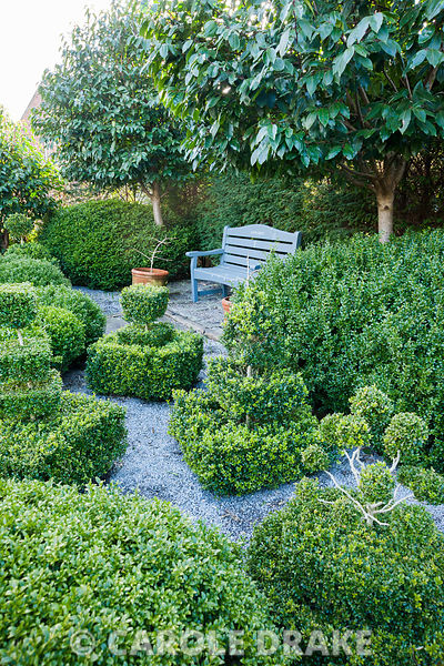 Topiary garden filled with low clipped box bushes surrounded by gravel with bench framed by Portugese laurels, Prunus lusitan...